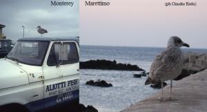 Nelle foto due gabbiani, il primo a Monterey all'inizio degli anni '80, il secondo a Marettimo nel 2010