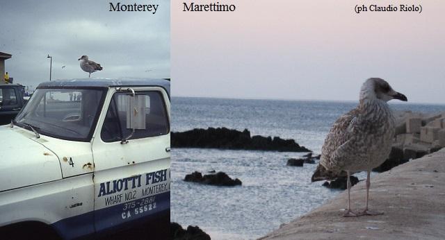 Marettimo, meravigliosa roccia fiorita in mezzo al mare