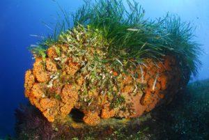 fondali marettimo isole egadi (1)
