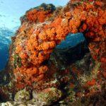 fondali marettimo isole egadi (2)