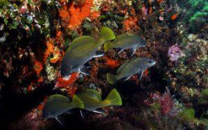 fondali marettimo isole egadi (5)