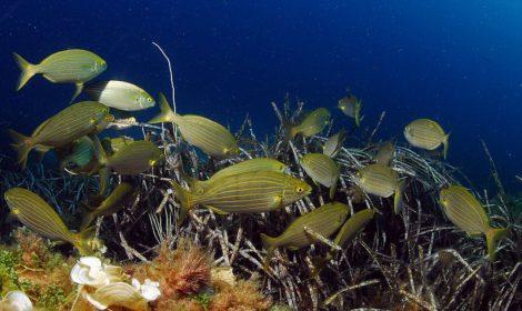 Siti d'immersione a Marettimo nelle isole egadi