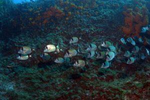 fondali marettimo isole egadi (9)