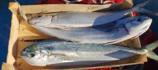 """""""Il capone, un pesce stagionale tutto da scoprire"""" Sabato 21 settembre  – Marettimo Domenica 22 settembre – Levanzo"""